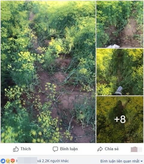 Cánh đồng hoa Ninh Thuận đóng cửa vì bị du khách dẫm nát - Ảnh 1.