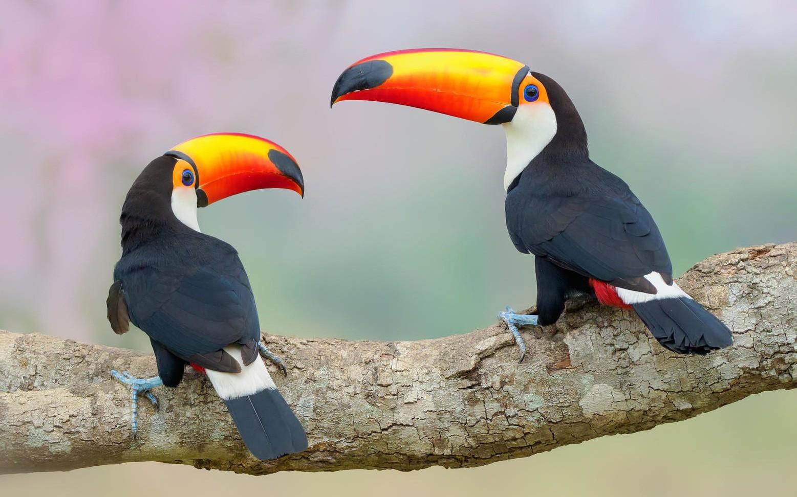 Đẹp ngỡ ngàng thế giới chim muông hoang dã
