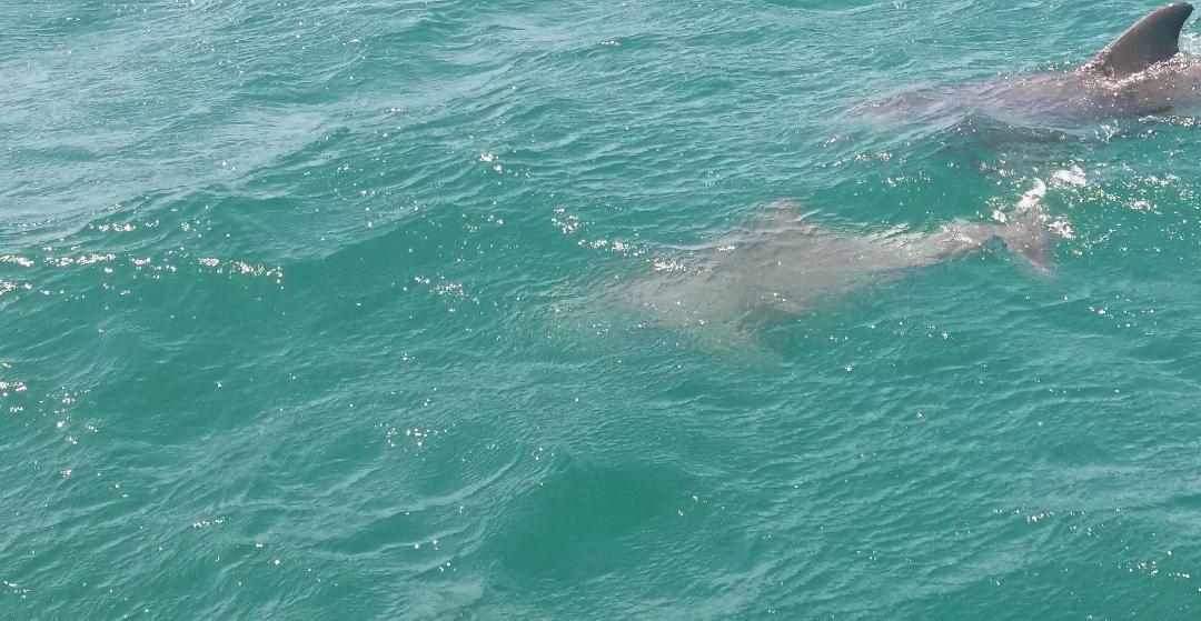 Đến Úc, xem biển hát và săn tìm cá heo - Ảnh 4.