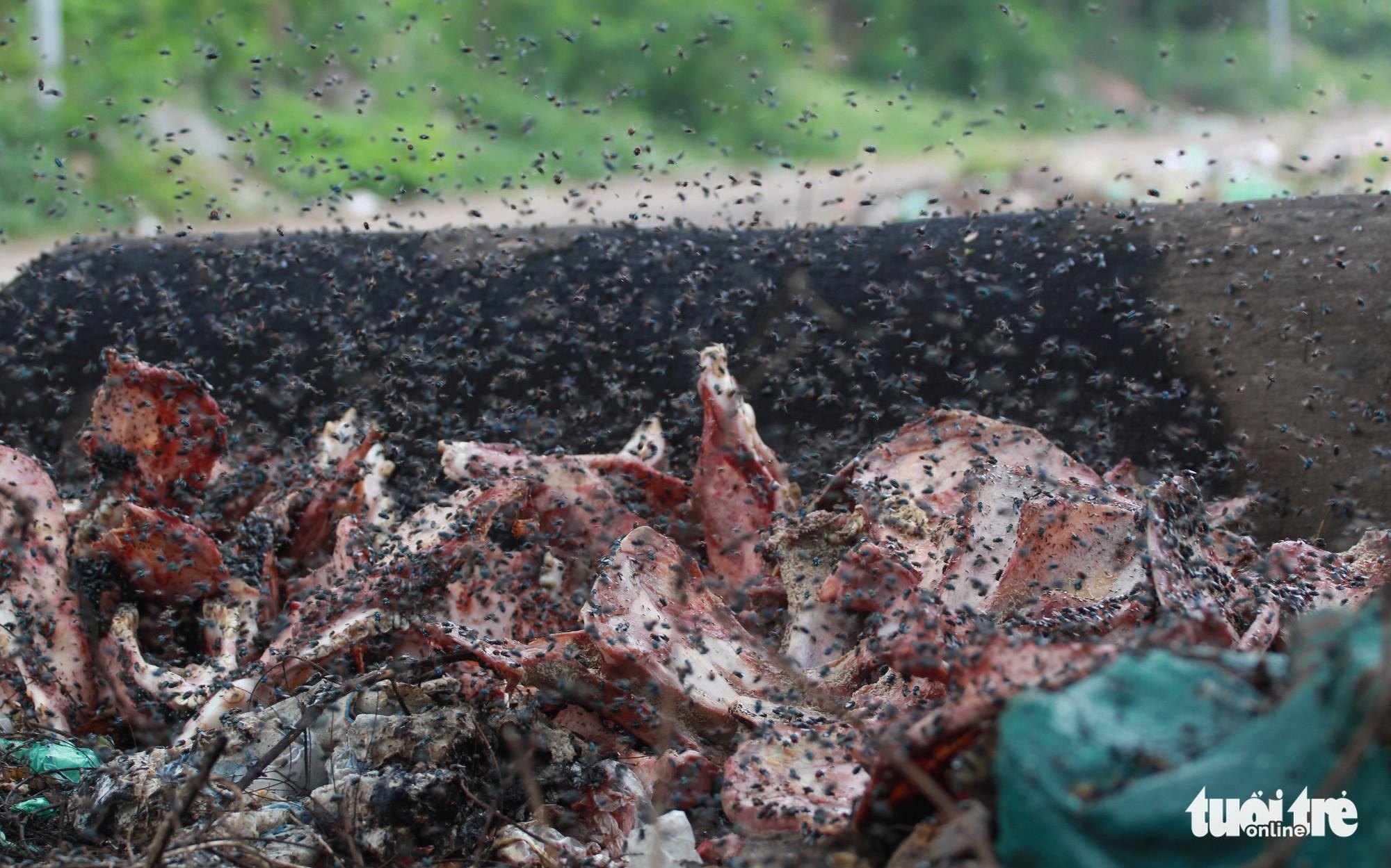 Ruồi nhặng bu đen nội tạng thối từ lò mổ vứt bên đường liên thôn