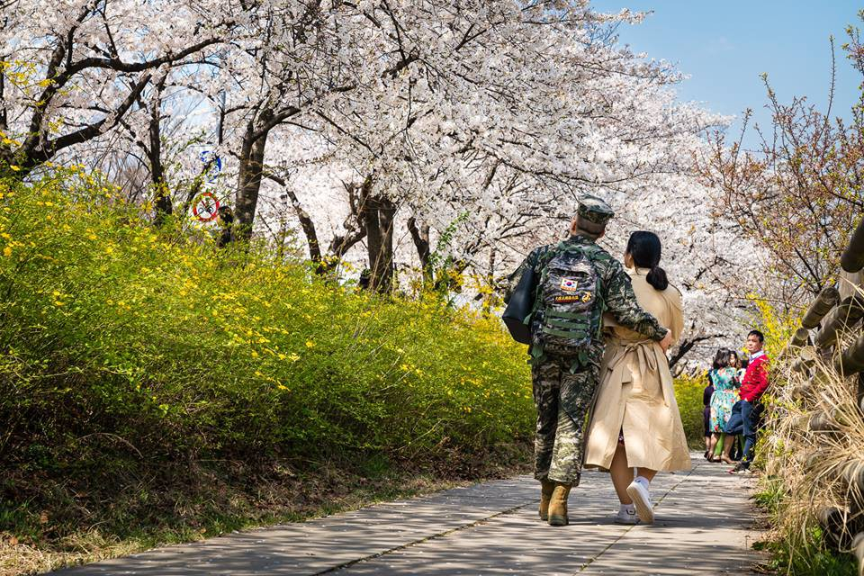 Seoul bừng sáng với hoa anh đào - Ảnh 5.