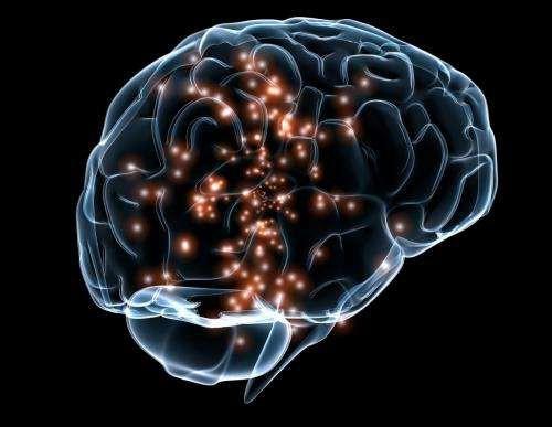 Nghiên cứu mới lại khẳng định não người già vẫn sản xuất nơ-ron thần kinh - Ảnh 2.