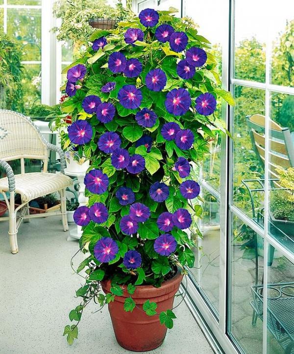 Nhà rực rỡ xanh mát nhờ các giàn hoa leo - Ảnh 4.