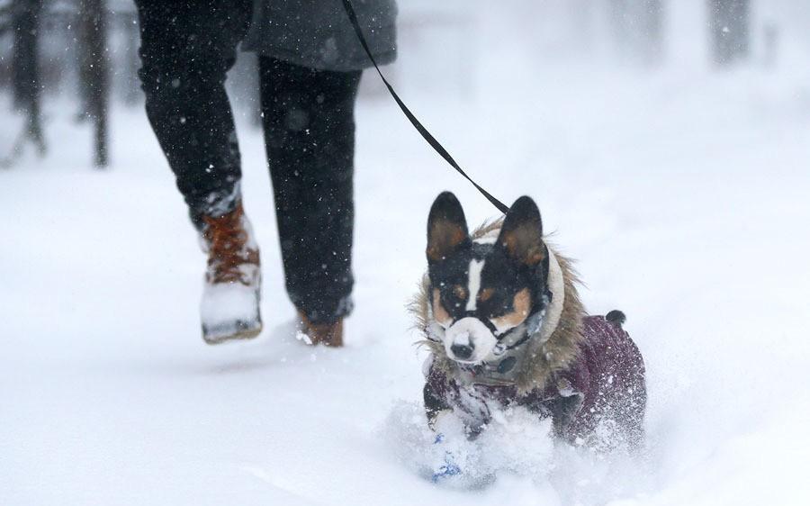 Thế giới trong tuần qua ảnh: 'bom bão' phủ tuyết lên nước Mỹ