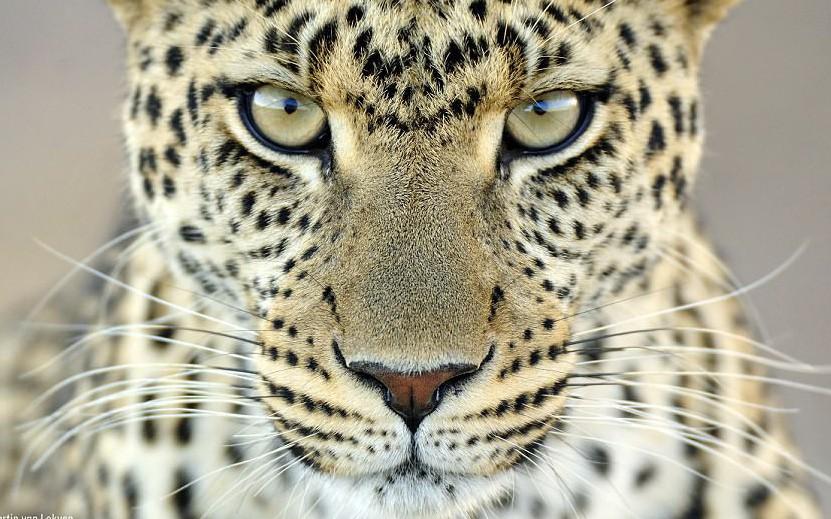 Những bức ảnh động vật sống động và vui