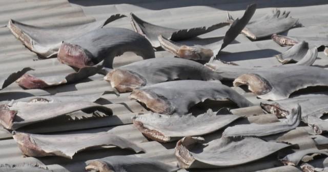 Vì sao Bộ Công thương đề nghị báo cáo vụ vây cá mập - Ảnh 1.
