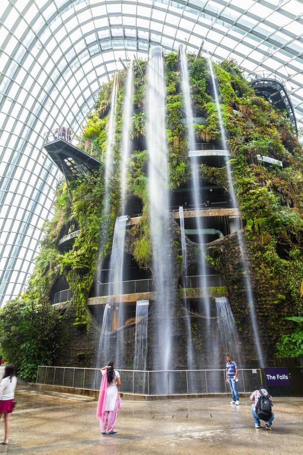 Khu rừng nhân tạo gây tranh cãi ở Singapore - Ảnh 3.