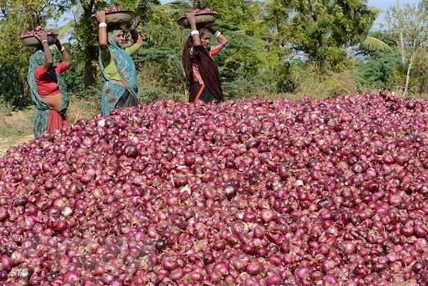 Giá hành củ thế giới tăng vọt sau lệnh cấm xuất khẩu của Ấn Độ - Ảnh 1.