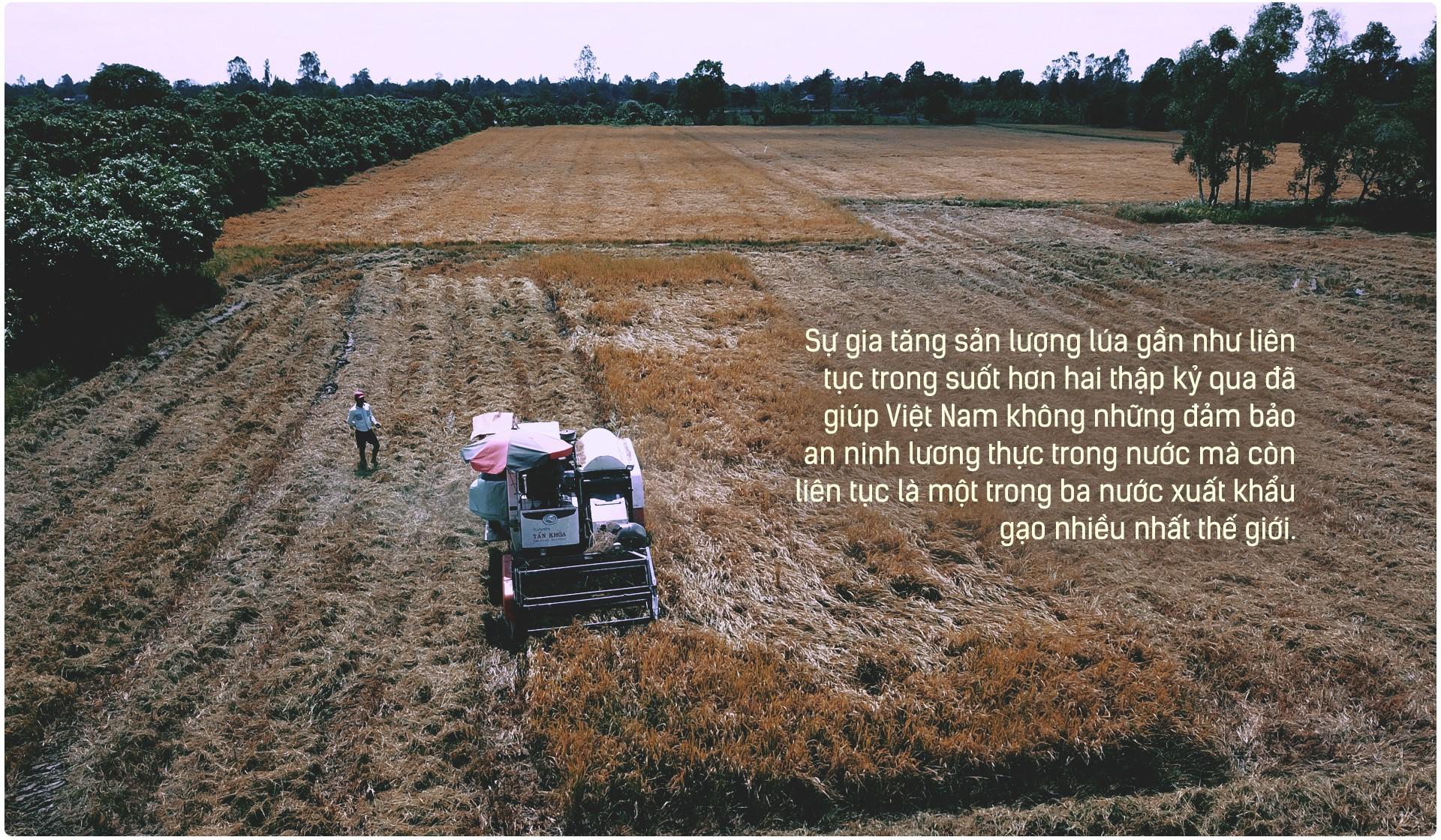 Hạt gạo Việt: 30 năm, một nỗi đau đáu về thương hiệu - Ảnh 9.