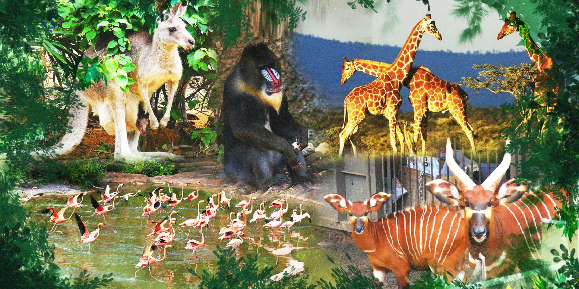 Chúng tôi sinh ra ở Safari - Ảnh 13.