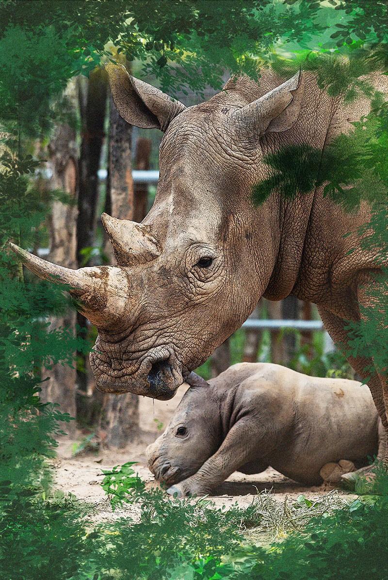 Chúng tôi sinh ra ở Safari - Ảnh 3.