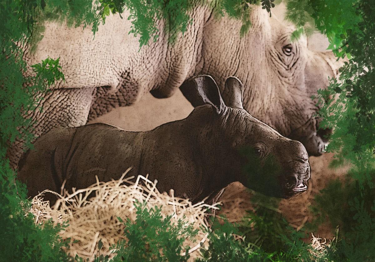 Chúng tôi sinh ra ở Safari - Ảnh 6.
