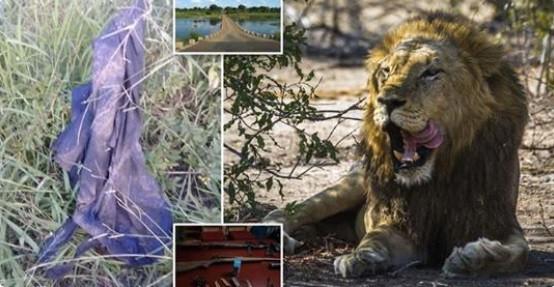 Kẻ săn trộm bị voi giày chết, sư tử ăn thịt - Ảnh 2.