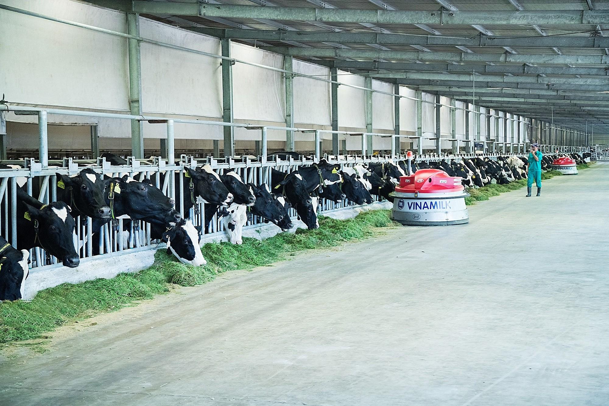 Khám phá các tiện nghi chuẩn 4.0 dành cho bò sữa của Vinamilk - Ảnh 4.