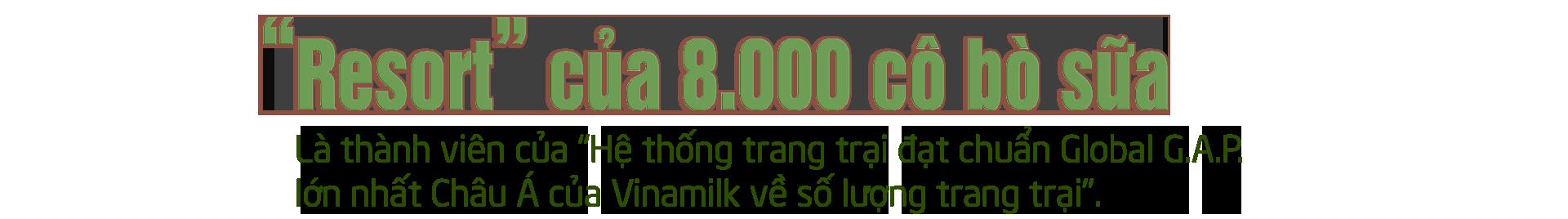 Khám phá các tiện nghi chuẩn 4.0 dành cho bò sữa của Vinamilk - Ảnh 1.