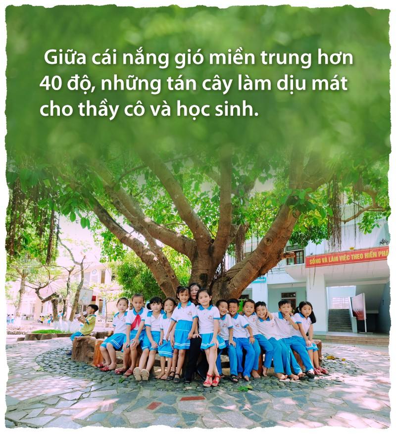 Ngôi trường rợp bóng cây như công viên - Ảnh 2.