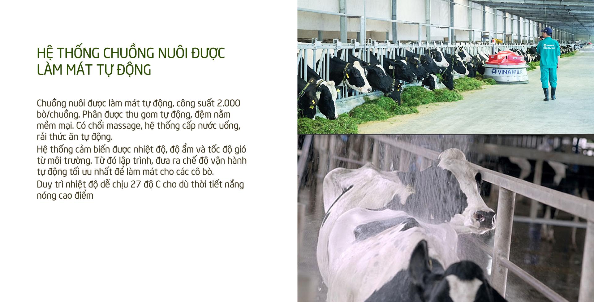 Khám phá các tiện nghi chuẩn 4.0 dành cho bò sữa của Vinamilk - Ảnh 9.