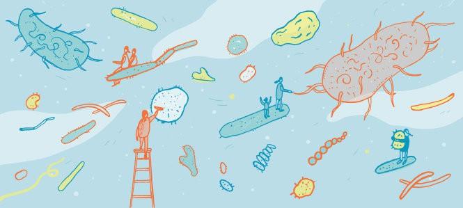 Vi khuẩn giết chết con người - Thiệt hại hơn một vụ cố sát - Ảnh 5.