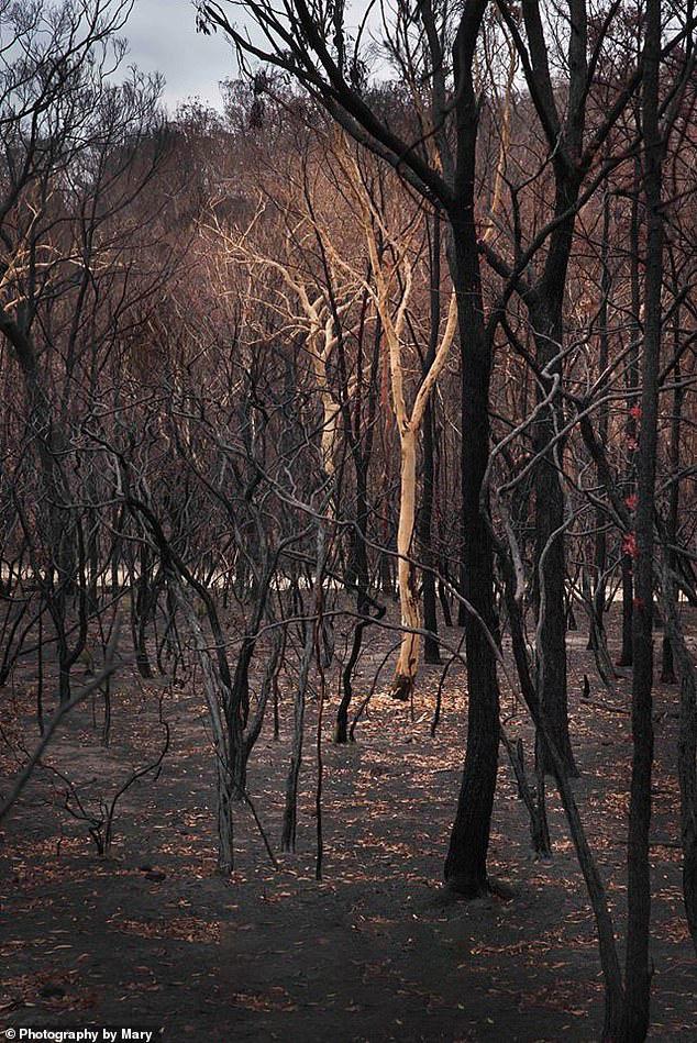 Giữa thảm họa cháy rừng Úc, những chồi non nhỏ bé kiên cường hi vọng tái sinh - Ảnh 4.