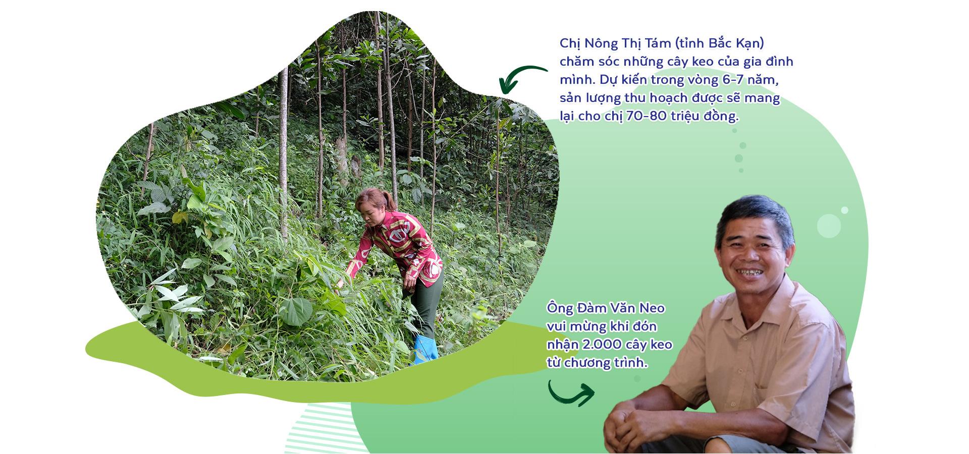 Triệu cây vươn cao - Hành trình xanh khởi đầu tương lai xanh - Ảnh 8.