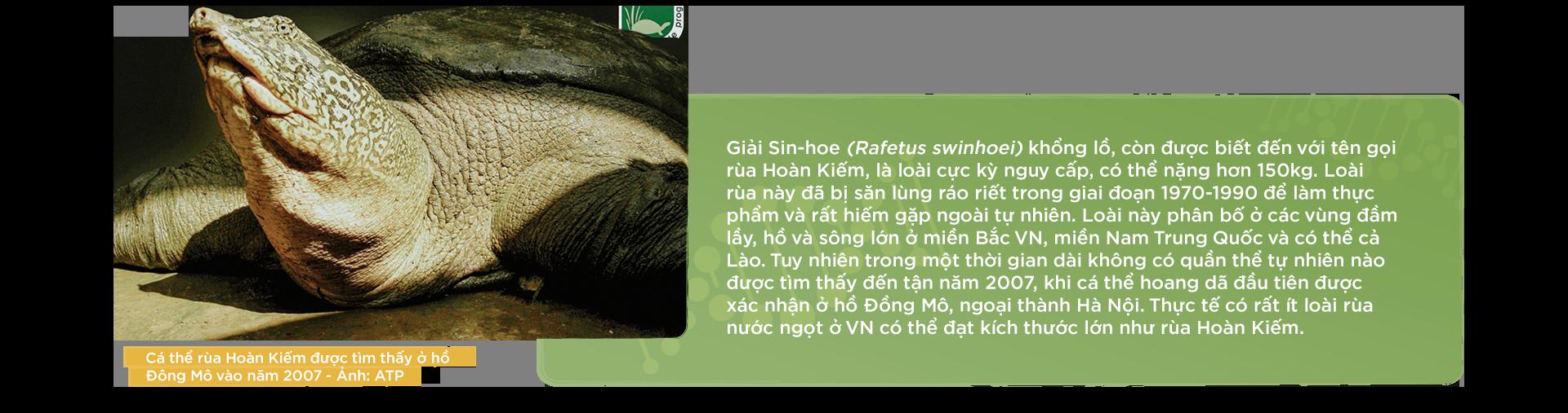 Kỳ 1: 13 năm theo dấu loài rùa Hoàn Kiếm - Ảnh 4.