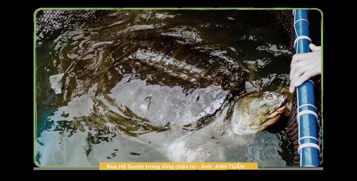 Kỳ 1: 13 năm theo dấu loài rùa Hoàn Kiếm - Ảnh 6.
