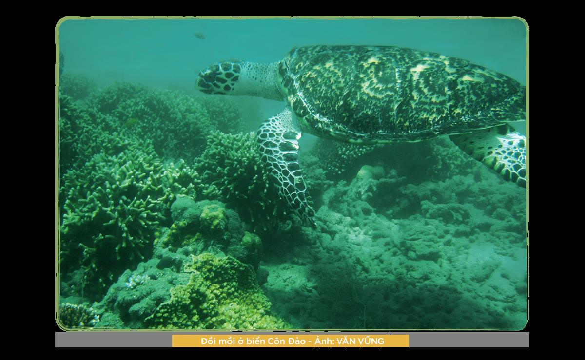 Kỳ 2: Những người bảo vệ rùa biển ở Côn Đảo - Ảnh 8.