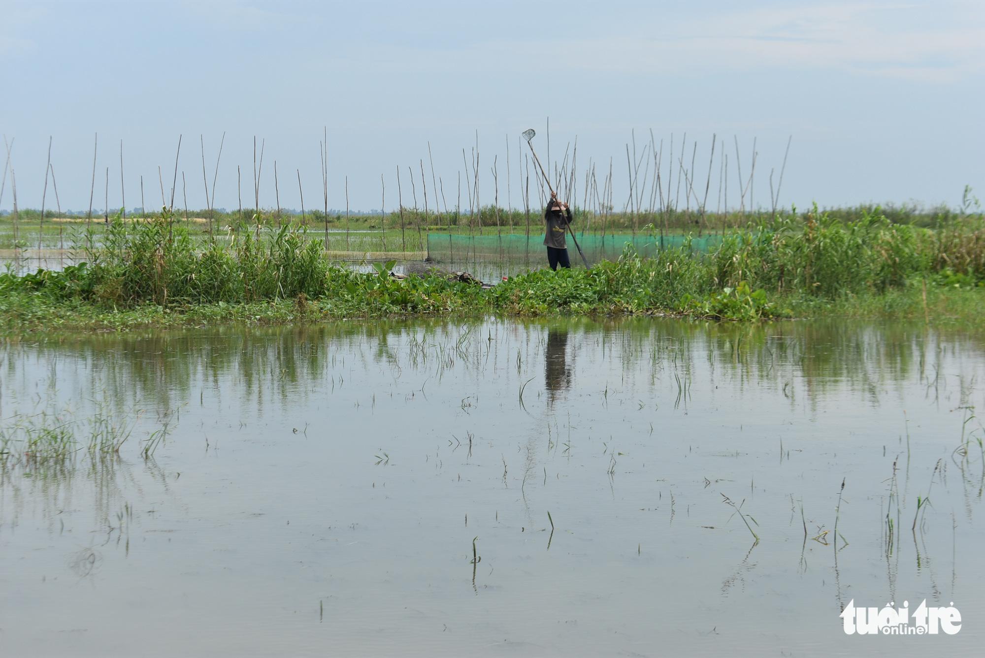 Nước lũ đã tràn đồng giáp biên giới Campuchia, chưa thấy cá tôm - Ảnh 3.