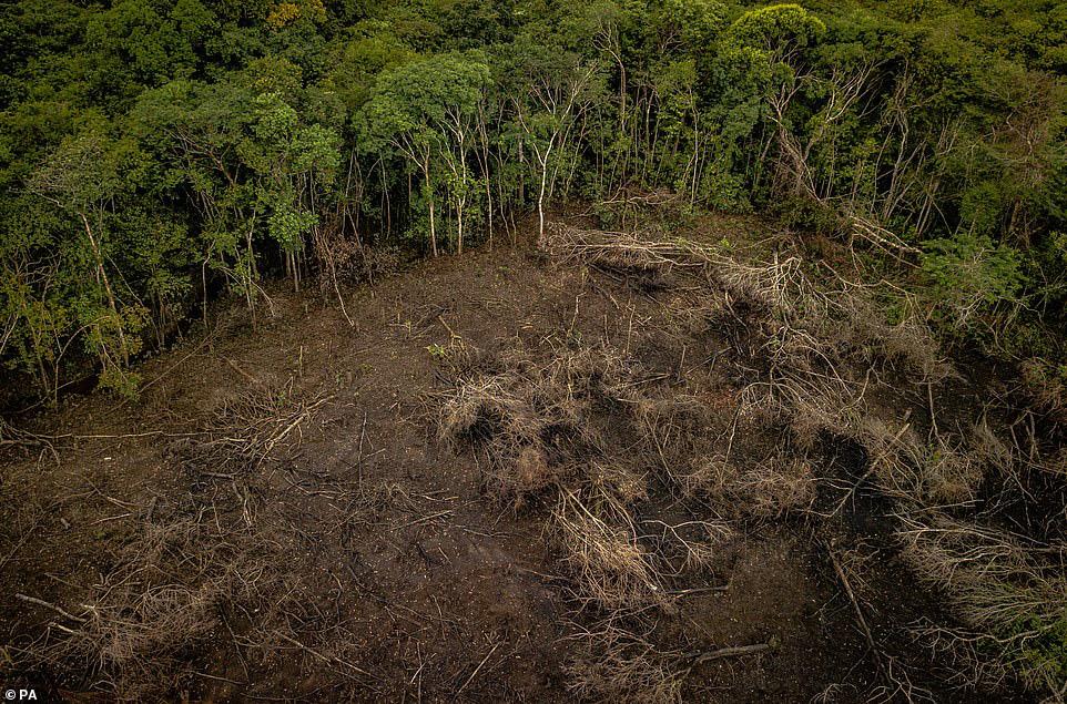 Thiên nhiên đang 'rơi tự do' vì lối sống của loài người - Ảnh 11.