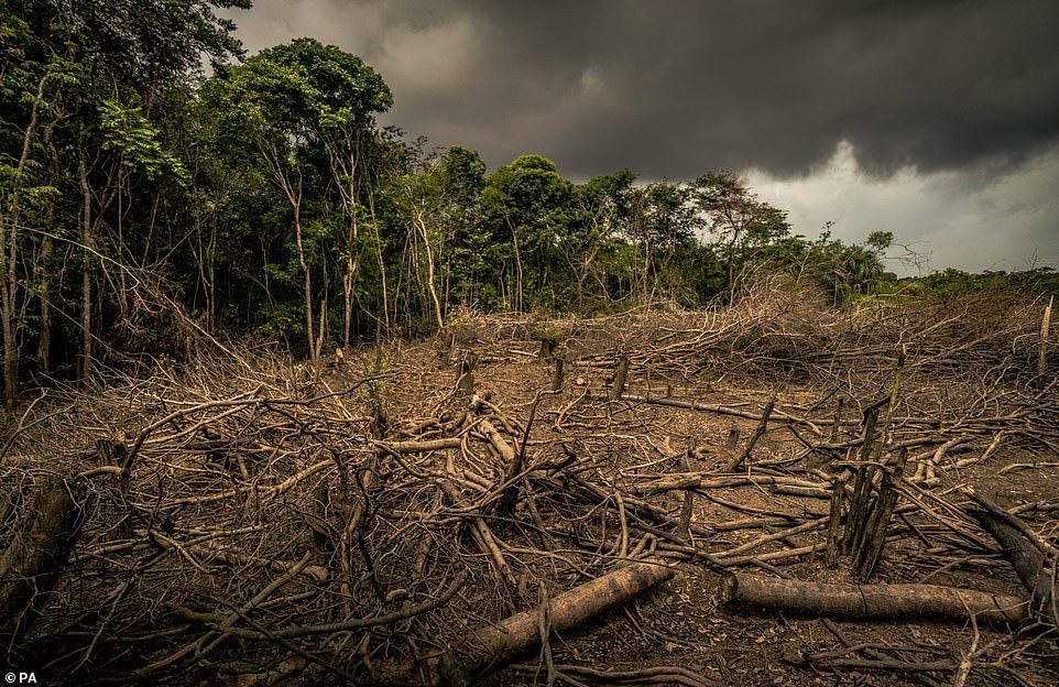 Thiên nhiên đang 'rơi tự do' vì lối sống của loài người - Ảnh 2.
