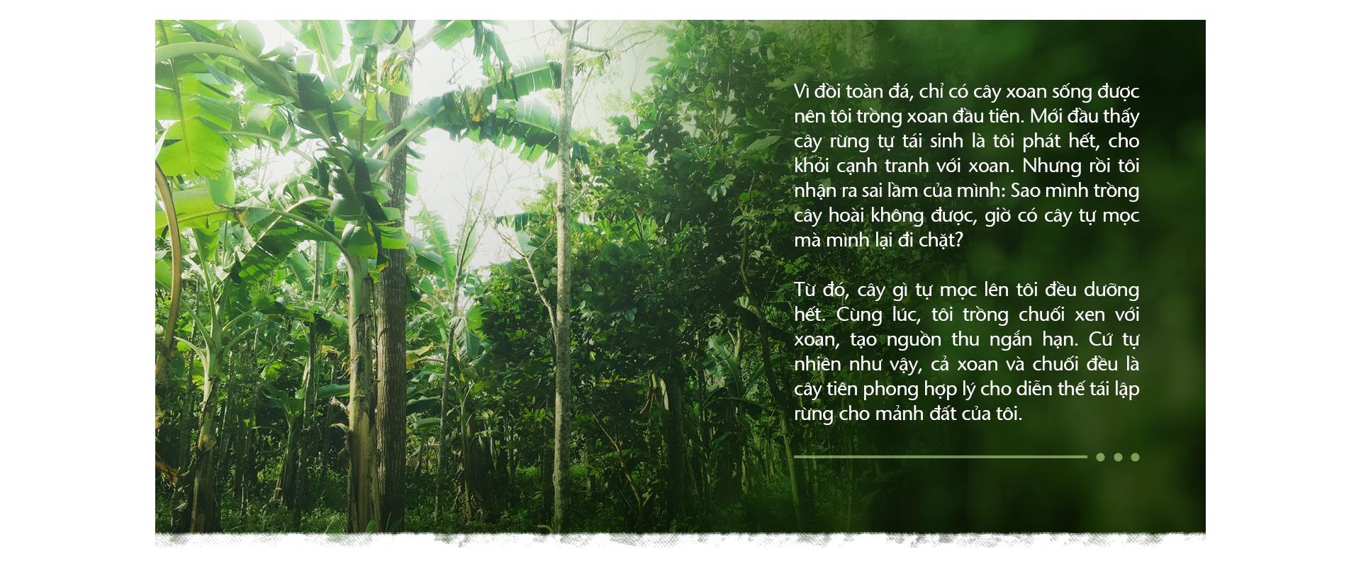 Trồng cây và nương tựa tự nhiên - Ảnh 2.