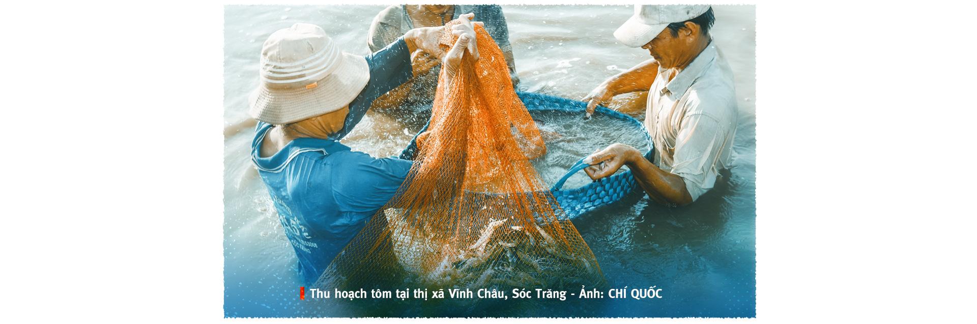 Vượt sóng COVID-19: Thủ phủ tôm Sóc Trăng vào vụ 'trúng bể tay' - Ảnh 2.