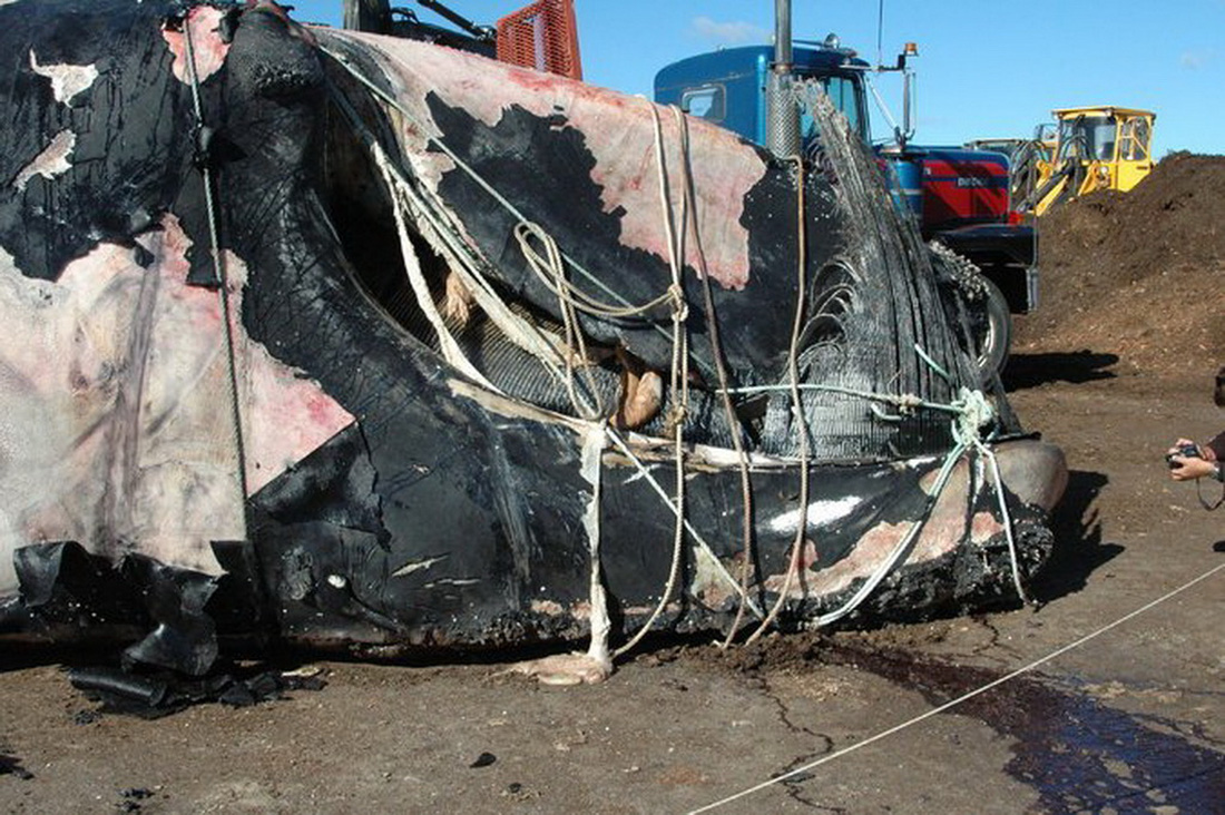 Biến đổi khí hậu, số lượng cá voi giảm nghiêm trọng - Ảnh 6.