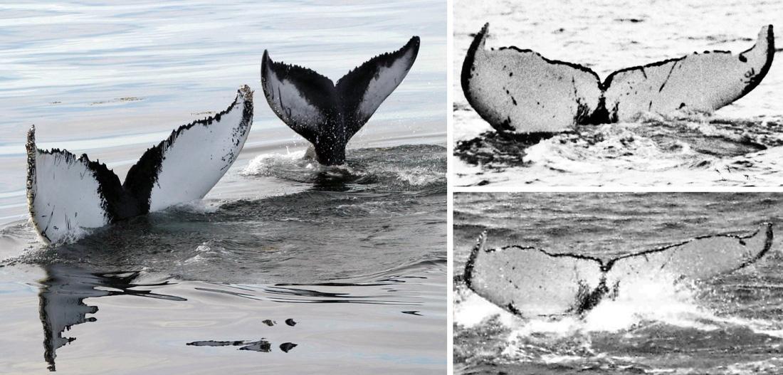 Biến đổi khí hậu, số lượng cá voi giảm nghiêm trọng - Ảnh 5.