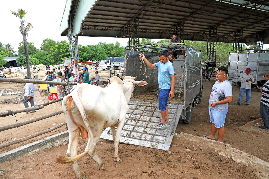 Về An Giang coi chợ bò mùa nước nổi - Ảnh 9.