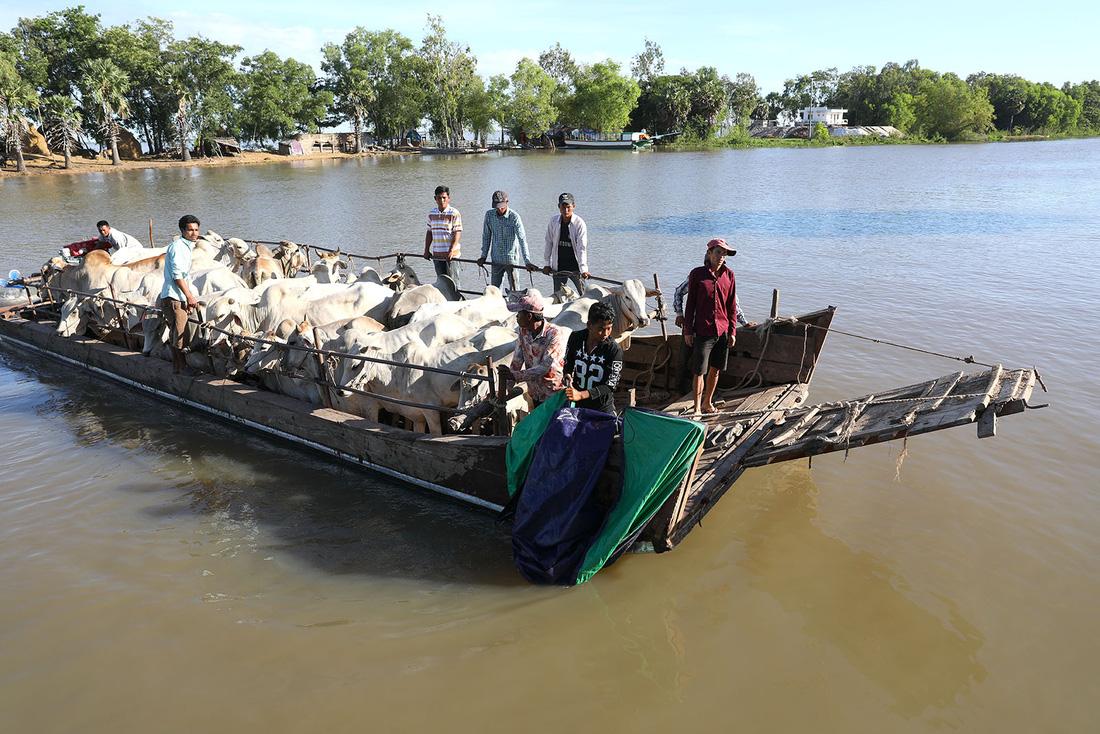 Về An Giang coi chợ bò mùa nước nổi - Ảnh 2.