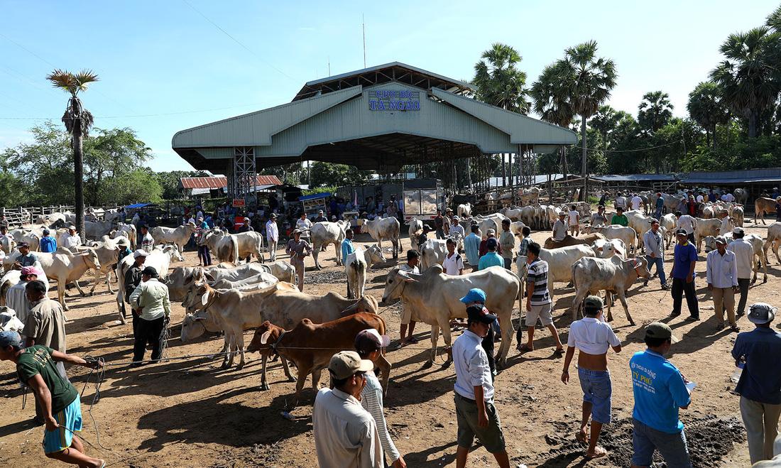 Về An Giang coi chợ bò mùa nước nổi - Ảnh 3.