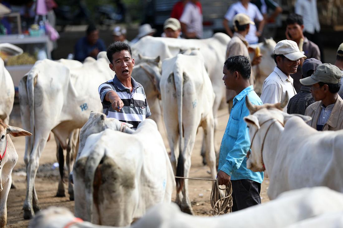 Về An Giang coi chợ bò mùa nước nổi - Ảnh 7.
