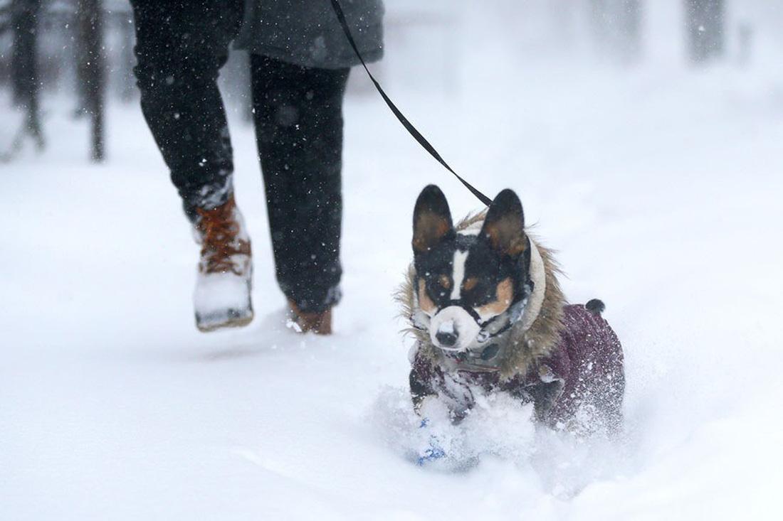 Thế giới trong tuần qua ảnh: 'bom bão' phủ tuyết lên nước Mỹ - Ảnh 2.