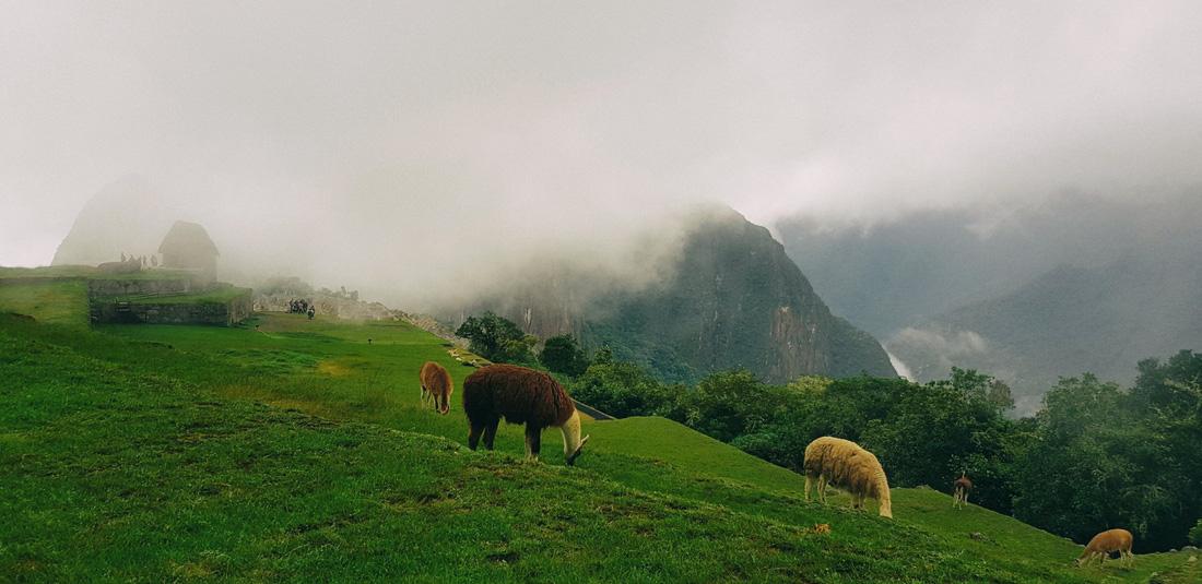 Trần Đặng Đăng Khoa chia sẻ kinh nghiệm đến kỳ quan Machu Picchu - Ảnh 5.