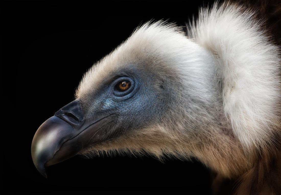 Đẹp ngỡ ngàng thế giới chim muông hoang dã - Ảnh 11.