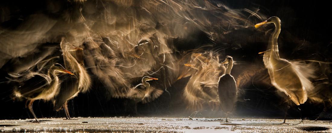 Đẹp ngỡ ngàng thế giới chim muông hoang dã - Ảnh 13.