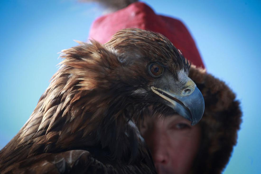 Lễ hội huấn luyện đại bàng ở Mông Cổ - Ảnh 2.