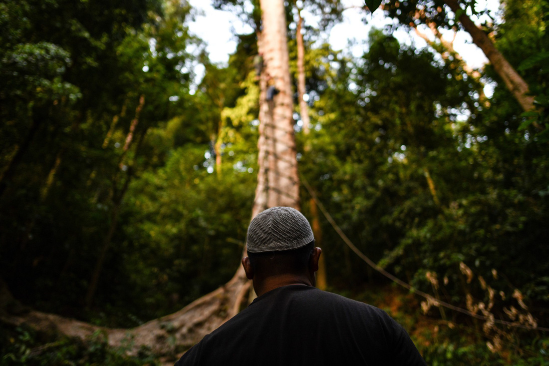 Săn mật ong trên những ngọn cây chọc trời ở Malaysia - Ảnh 3.
