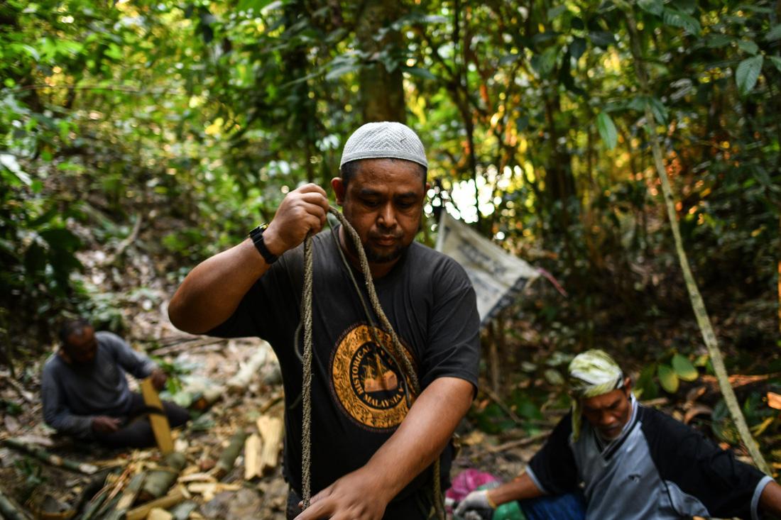 Săn mật ong trên những ngọn cây chọc trời ở Malaysia - Ảnh 5.