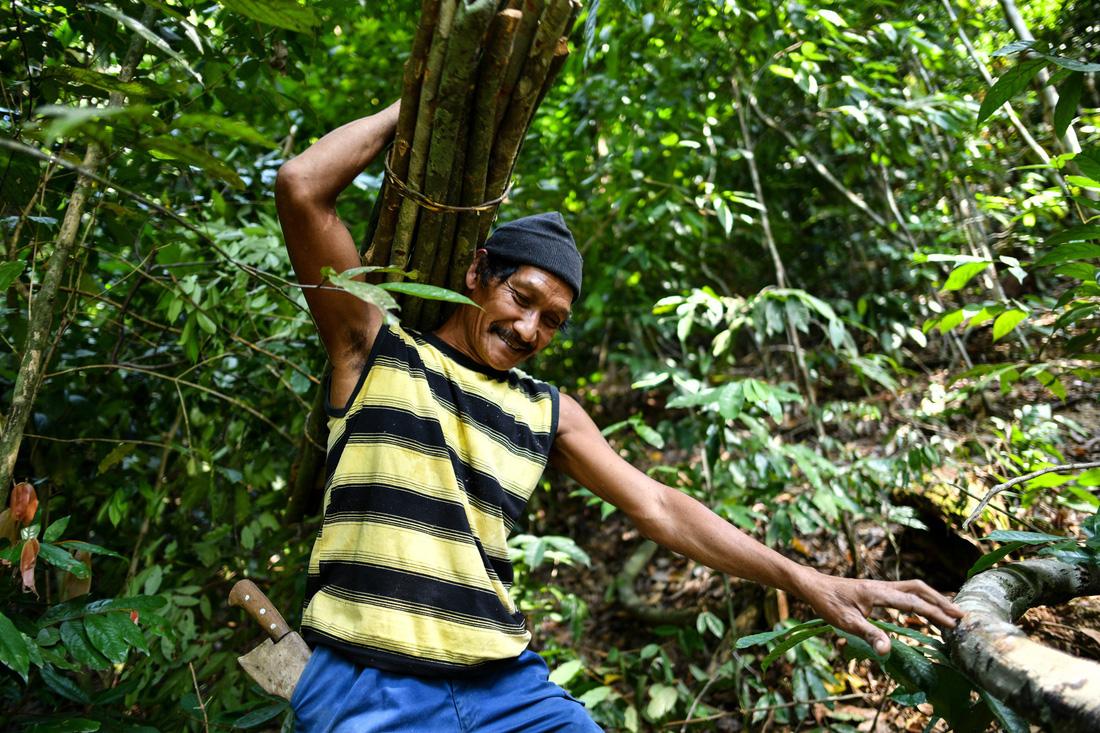 Săn mật ong trên những ngọn cây chọc trời ở Malaysia - Ảnh 4.