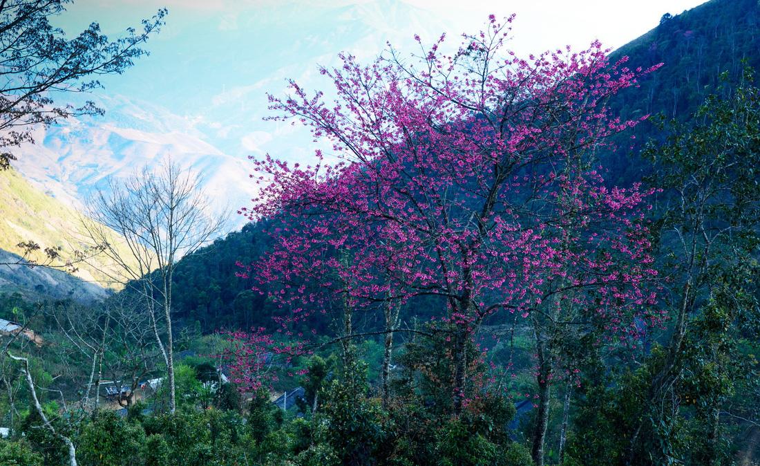 Bản sắc Việt: Thả hồn vào  mây núi Tà Xùa - Ảnh 2.
