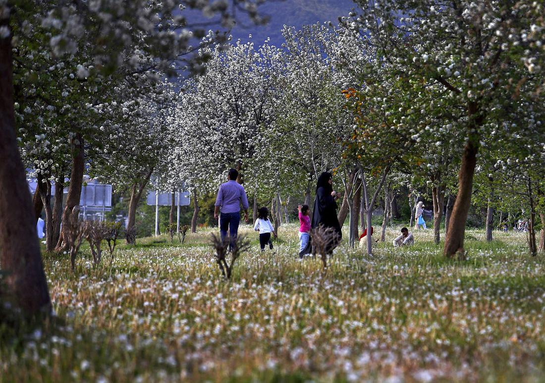 Ngất ngây hoa xuân nở rộ khắp thế giới - Ảnh 15.