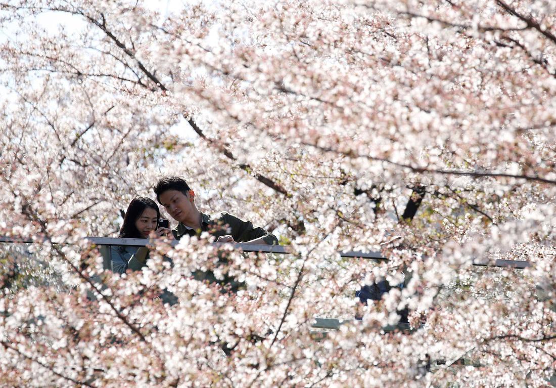 Ngất ngây hoa xuân nở rộ khắp thế giới - Ảnh 5.