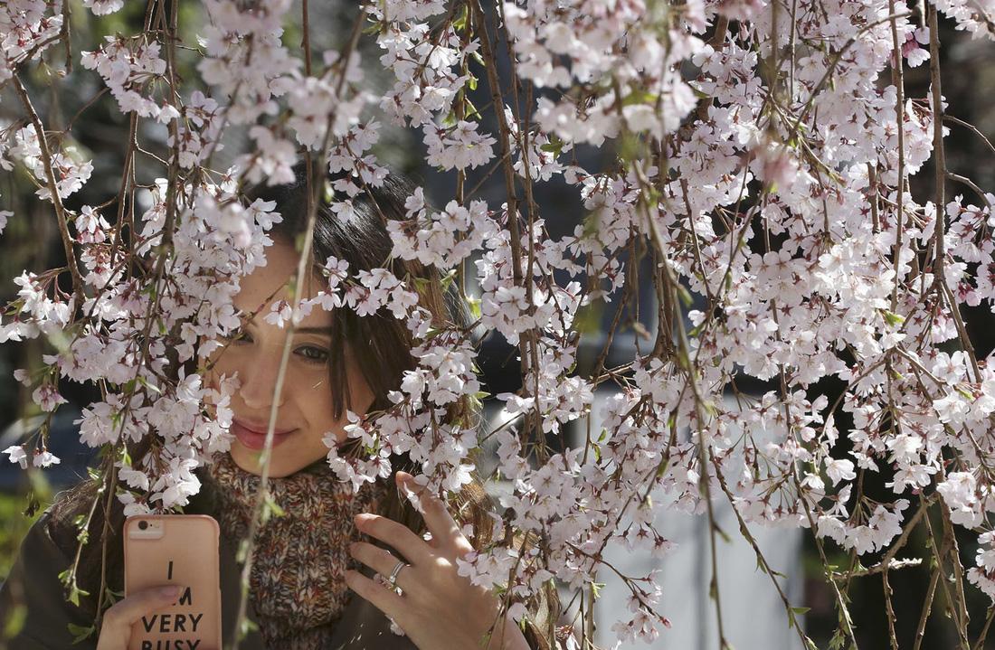 Ngất ngây hoa xuân nở rộ khắp thế giới - Ảnh 8.